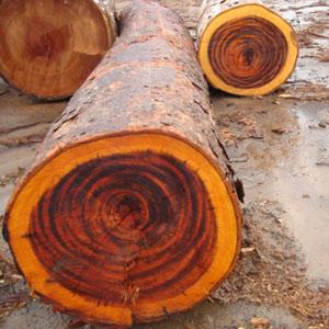 Tigerwood log