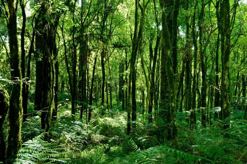 Exotic Hardwood Species