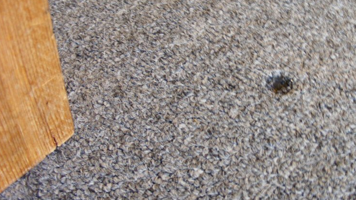 Effective Ways to Repair Burns in Home Carpeting